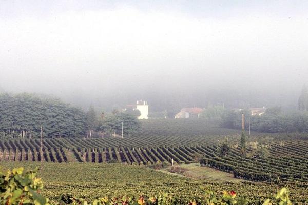 brouillard-sauternes-cadeau-gourmand