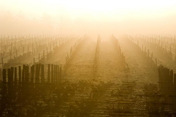 brouillard-et-sauternes-cadeau-gourmand