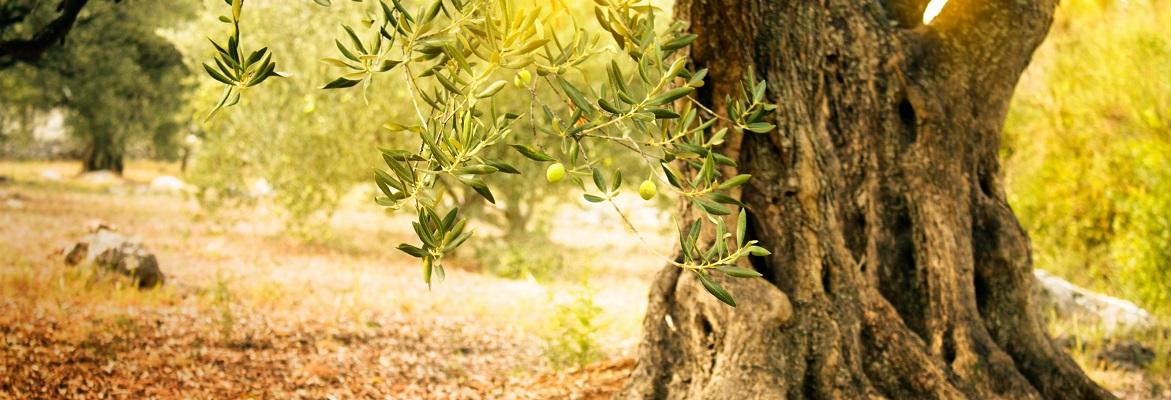 Coffret cadeau découverte et dégustation huiles d'olive espagne grands crus extra vierge