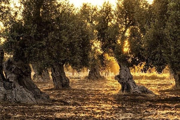 Coffret cadeau dégustation huile olive vierge extra espagne artisanale