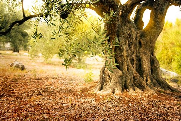 Coffret cadeau dégustation huile olive vierge extra espagne artisanale ecologique