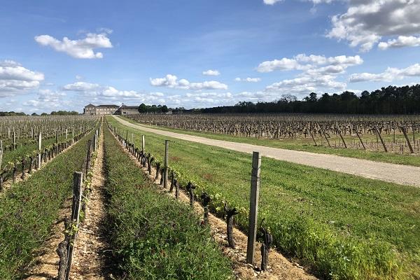 vins-graves-terroir-chateau-crabitey