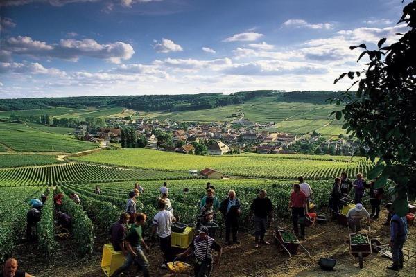 Vendanges a Epernay champagne La Gourmet Box coffret cadeau vin