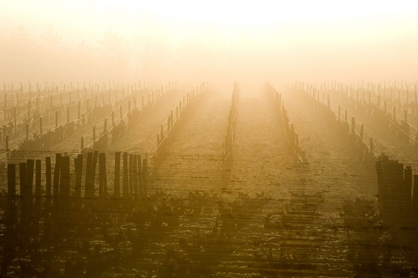 Brouillard et Sauternes La Gourmet Box coffret cadeau vin