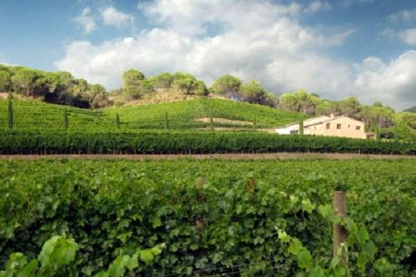 Can Grau Vell coffret cadeau vin espagnol de la Gourmet Box
