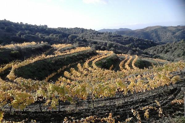 vignes du priorat Coffret vin espagnol