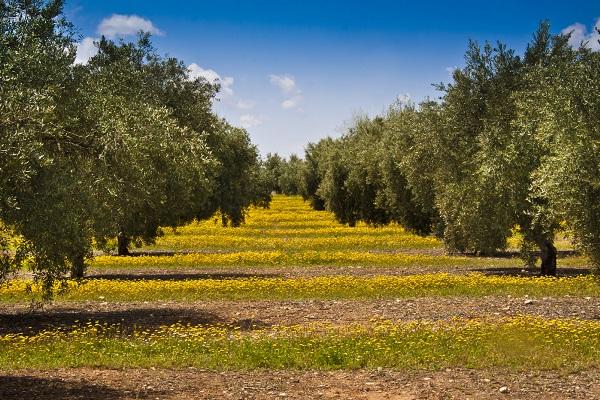 Oliveraie herbacée La Gourmet box coffret cadeau huile d'olive